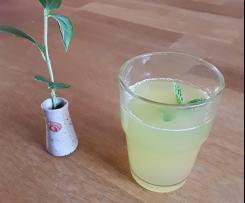 Zitrone-Minz-Limonade