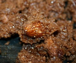 Nutella - Mandeln