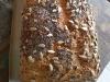 Variation von Variation von Bäcker-Brot in 5 Minuten (Variation von Dinkel-Körner-Brot)