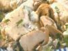 Steinpilzragout mit Semmelnocken